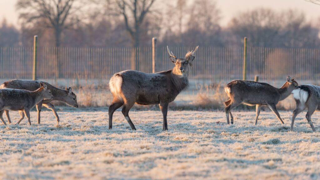 Deer Fencing & Stock Fencing